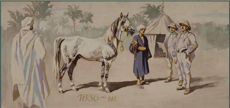 Ankauf-Expedition 1836 Baron Herbert - Import Shagya db *1830