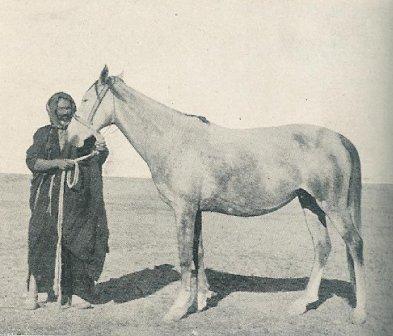 Shagya-Araber Stammstute - importiert aus der Wüste 1903 durch M. Fadlallah el Hedad