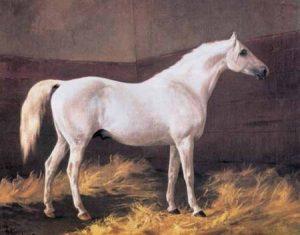 Shagya X 1855 Mez - bedeutender Vertreter der Shagyas (Hengstlinie Shagya)