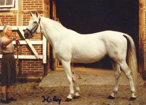 Einer der bekanntesten Shagyas: Shagya XXXIX-11 mit seiner Züchterin und Reiterin Elisabeth von Kleist